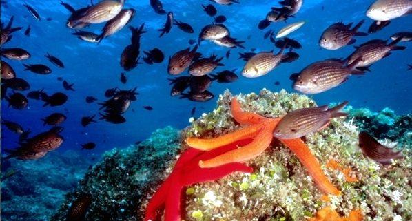 biologia marina mediterraneo pesci e altre forme di vita dei nostri mari